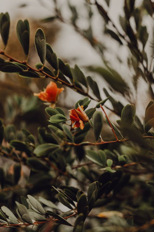 Branch of plant with delicate red flower