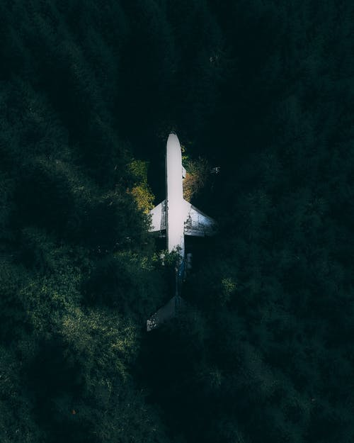 Airplane among green trees of forest