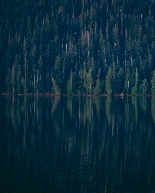 Calm lake with forest reflected in water surface