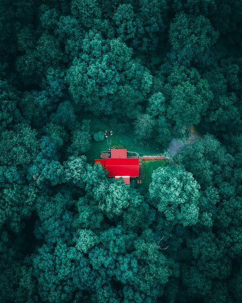 Lonely house in green dense forest