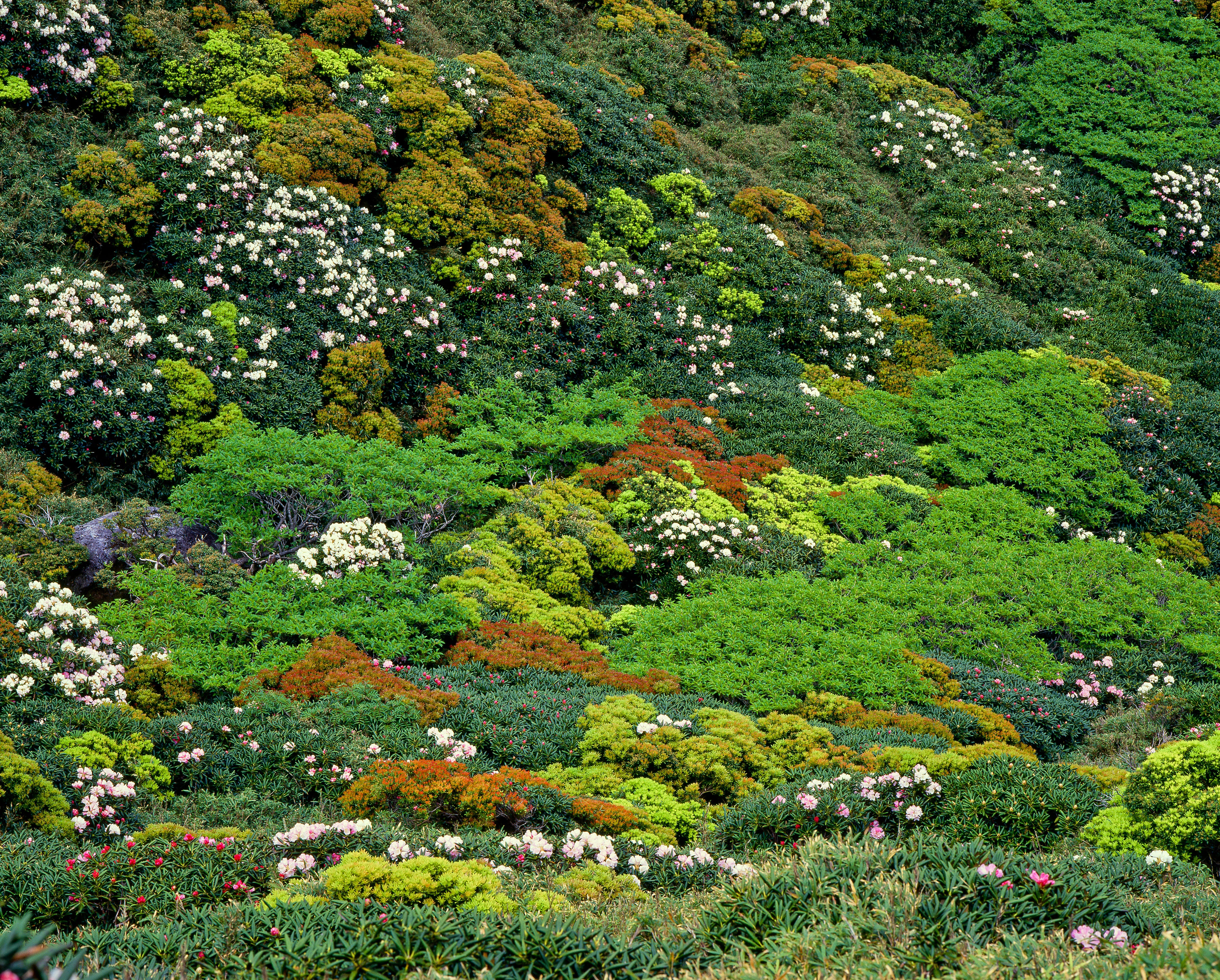 Free stock photo of japan, vegetation, june, yakushima highland