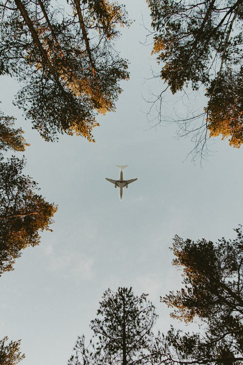 Plain flying over forest with high trees