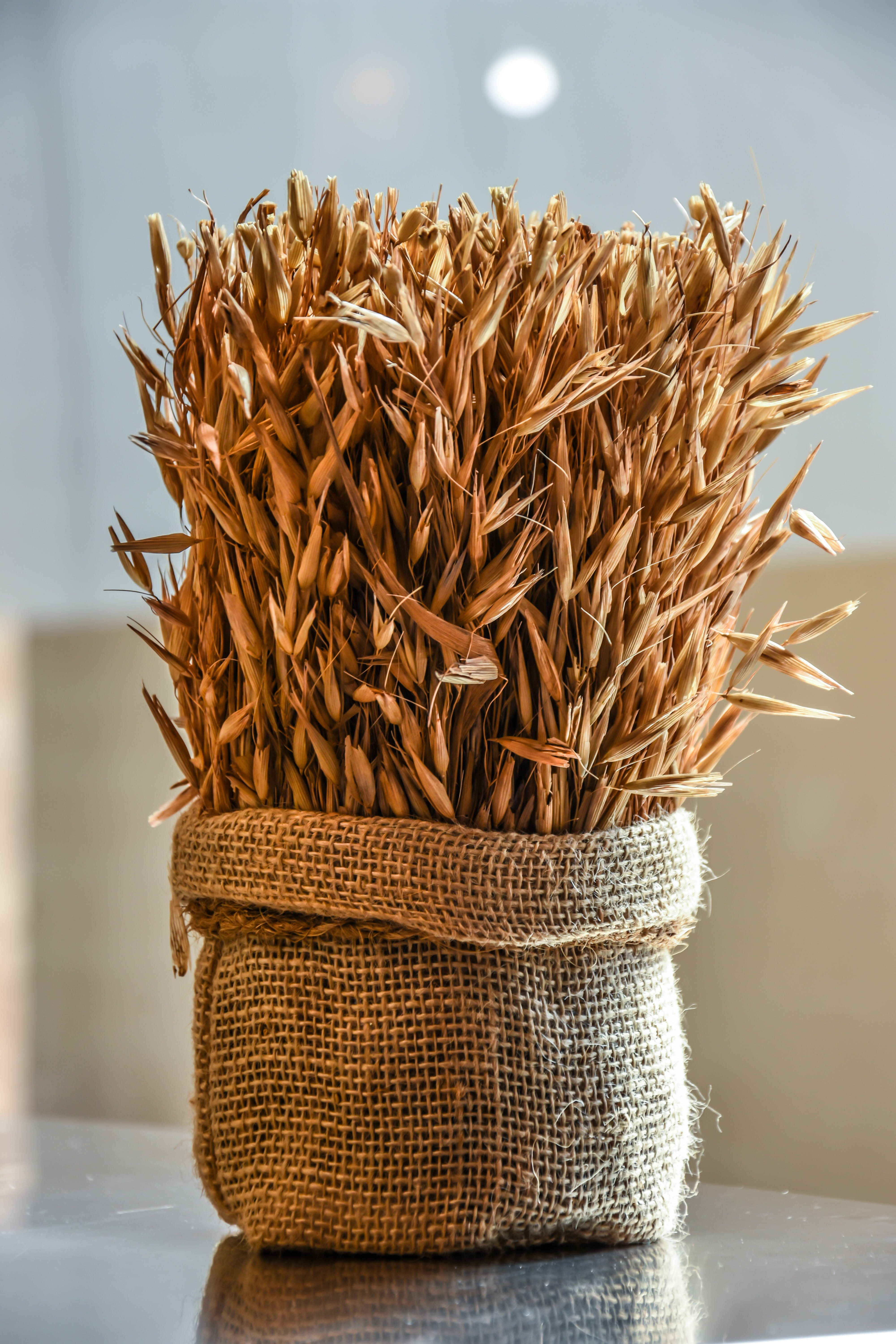 Free stock photo of agriculture, autumn, bakery, barley