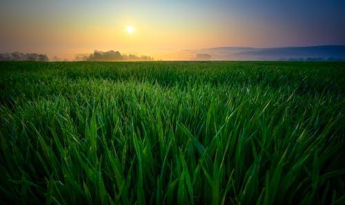 Foto d'estoc gratuïta de alba, camp, camps de cultiu, cel