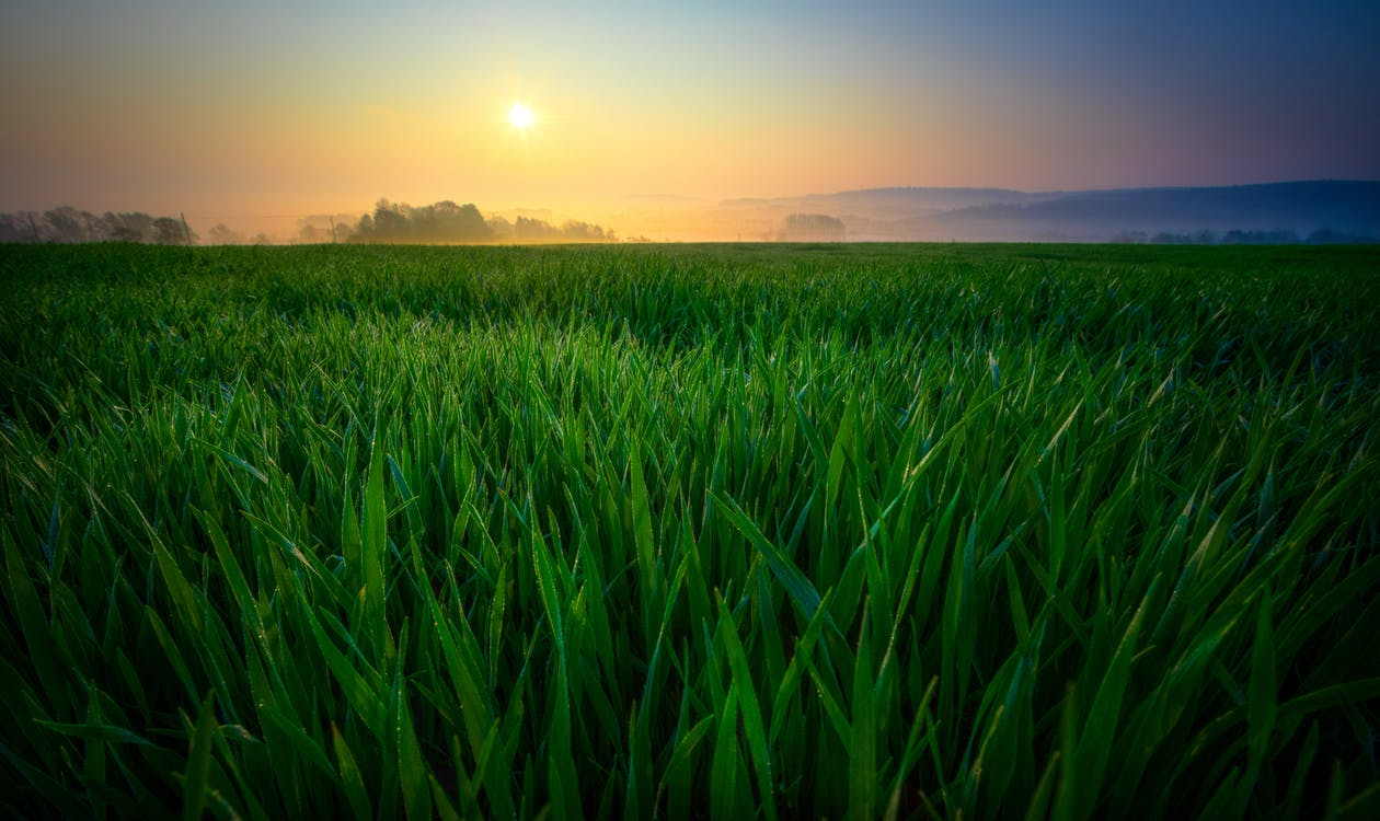 amanecer, campo, campos de cultivo