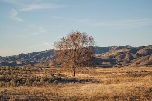 Autumn tree in field near mountains under serene sky