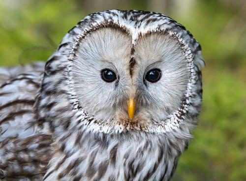 Darmowe zdjęcie z galerii z dzika przyroda, ptak, ptasi