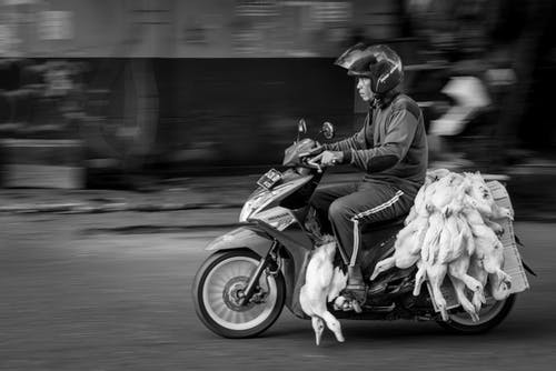 Ethnic biker riding moped with pile of dead geese