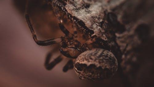 A Close-Up Shot of a Spider