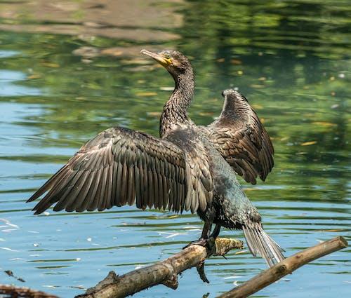 Foto d'estoc gratuïta de a l'aire lliure, aigua, ala