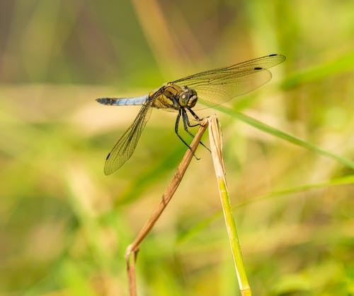 Side view of dragonfly with transparent wings and thin spiky legs standing on bright flexible stem in summer in sunlight