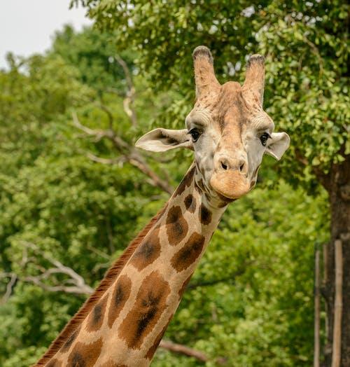 Fotos de stock gratuitas de al aire libre, alargado, animal, árbol