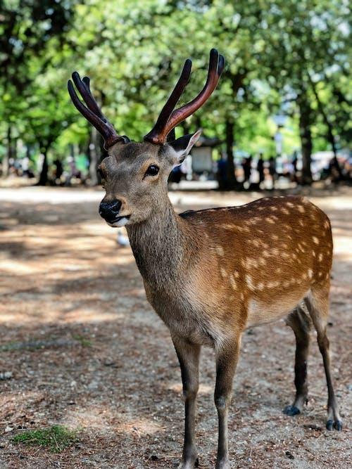 Brown Deer Standing on Brown Soil