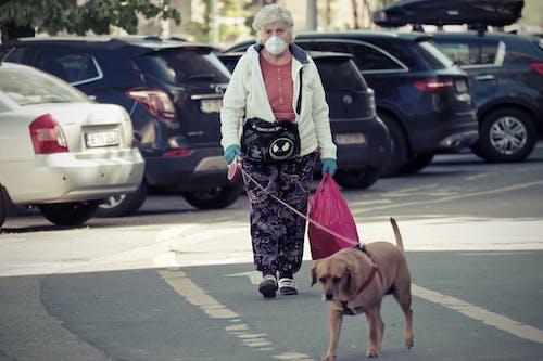 Foto profissional grátis de andando, animal de estimação, cachorro, calçamento