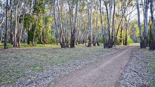 Free stock photo of australia, countryside, deserted