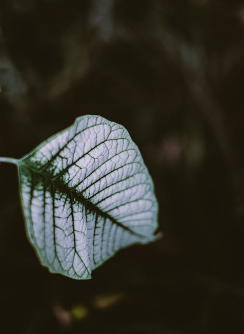 Shiny leaf with veins in park in daylight