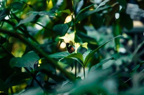 Základová fotografie zdarma na téma barva, botanická zahrada, botanický