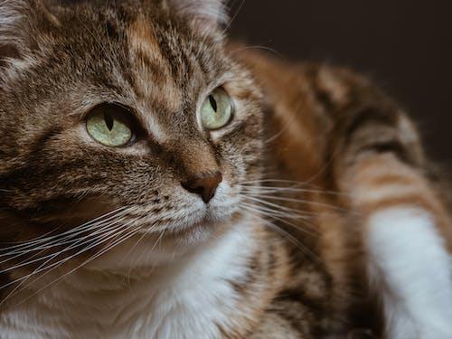 Δωρεάν στοκ φωτογραφιών με απαλός, αστείος, Γάτα, γατάκι