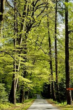 Kostenloses Stock Foto zu straße, landschaft, natur, wald