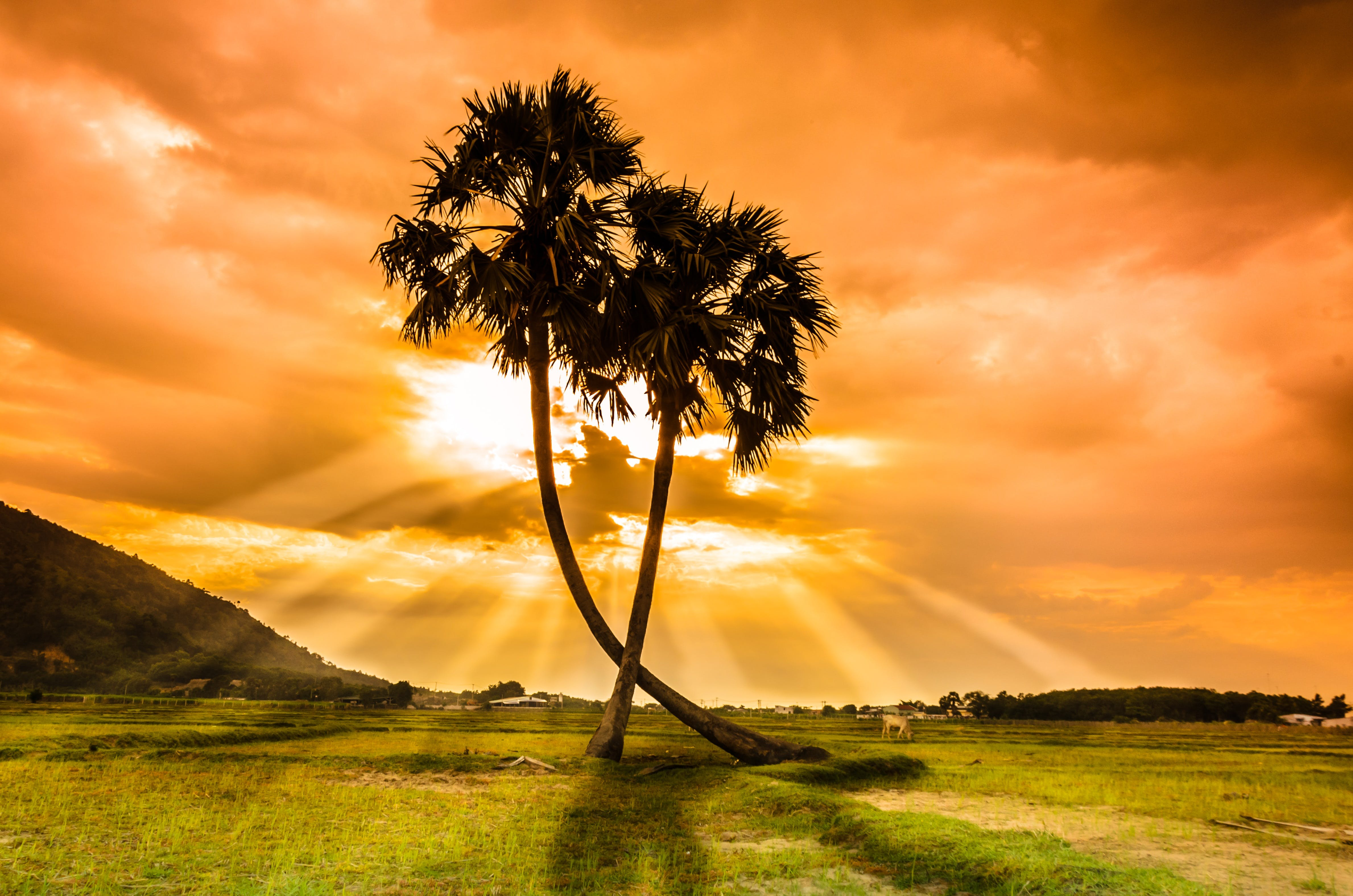 Palm Trees Against Sunlight on Meadows