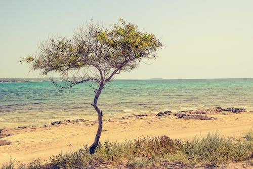 Безкоштовне стокове фото на тему «берег моря, вода, вродлива, Денне світло»