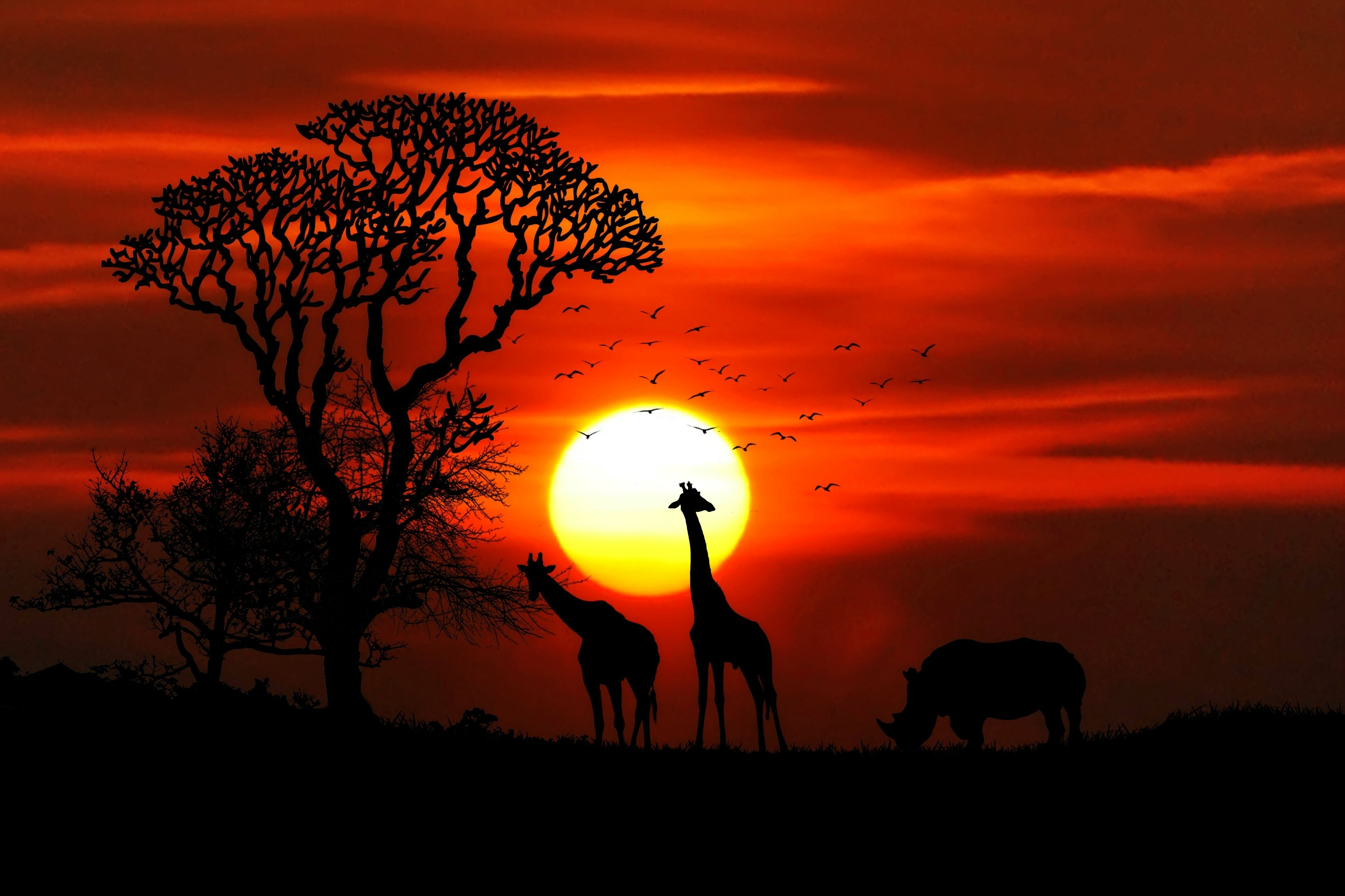 Silhouette Photography of Two Giraffe and Rhinoceros during