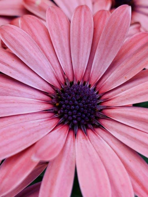 Fotos de stock gratuitas de amable, armonía, aroma, aromático