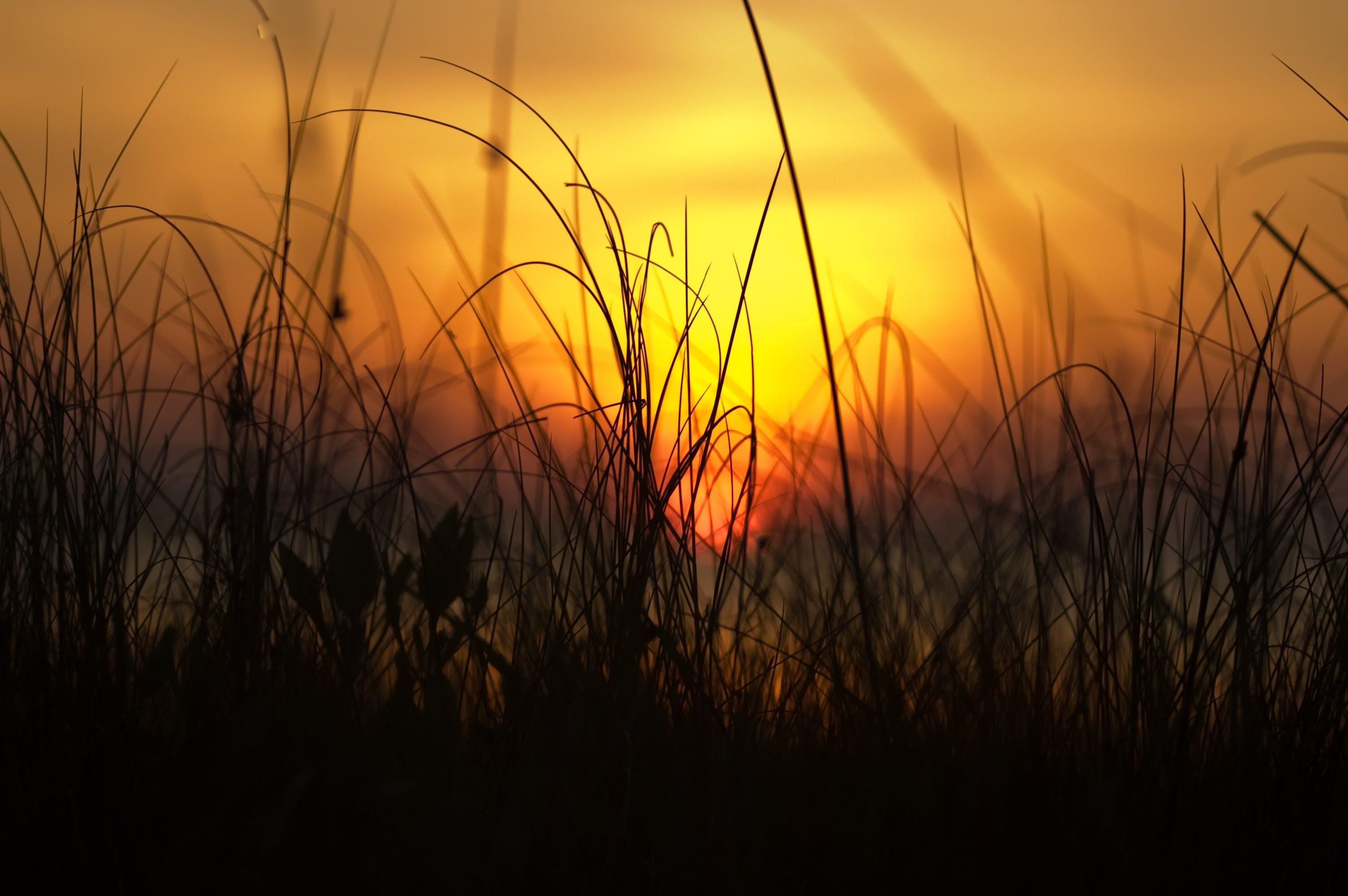 bright, dawn, dusk