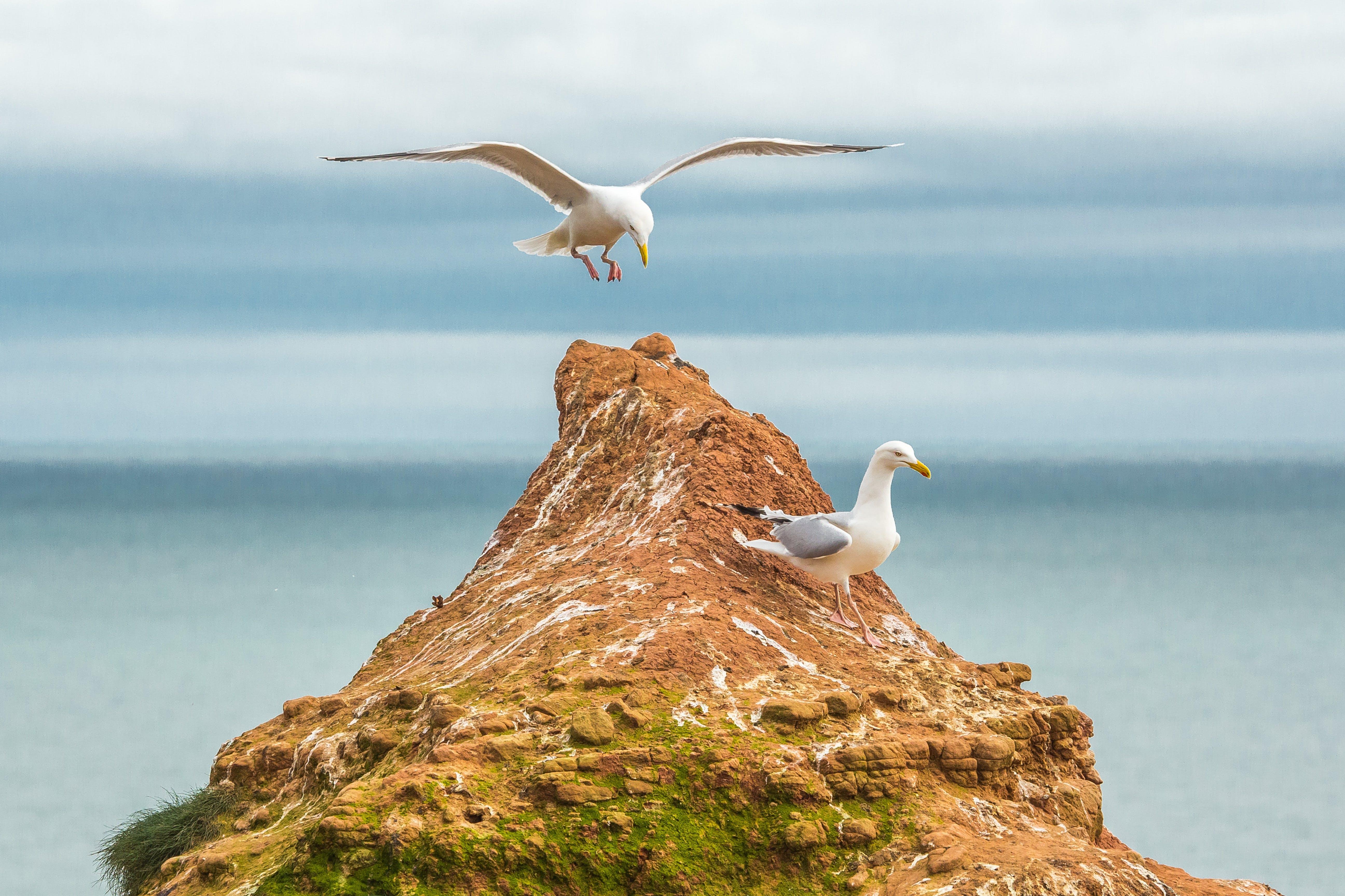 White Seagulls