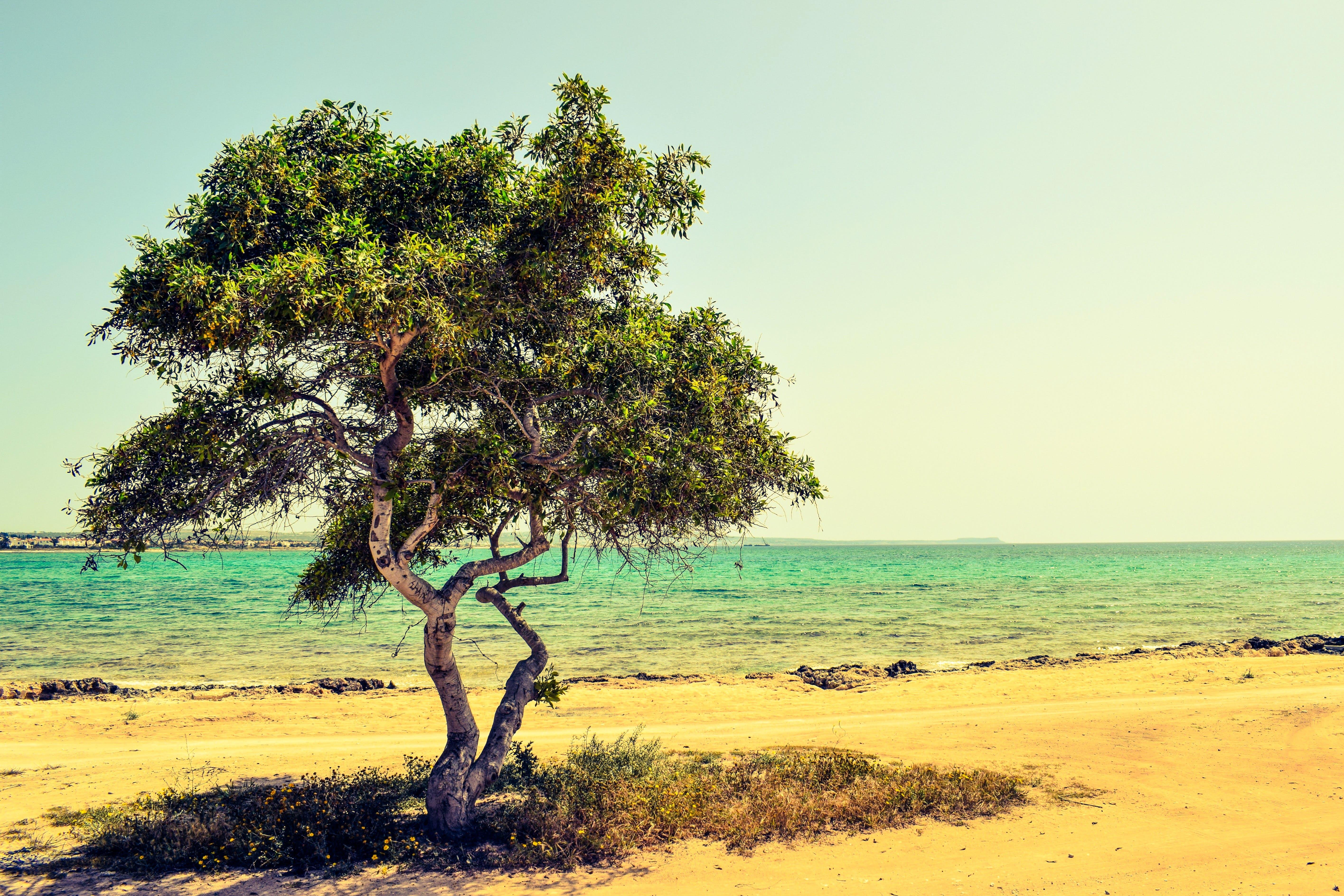 Kostnadsfri bild av gräs, hav, havsområde, havsstrand