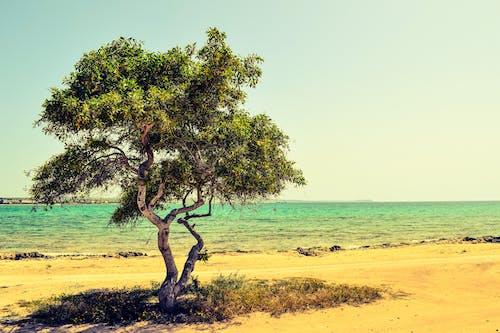 Δωρεάν στοκ φωτογραφιών με ακτή, άμμος, γρασίδι, γραφικός