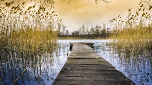 Darmowe zdjęcie z galerii z dok, drewno, drzewa, jasny