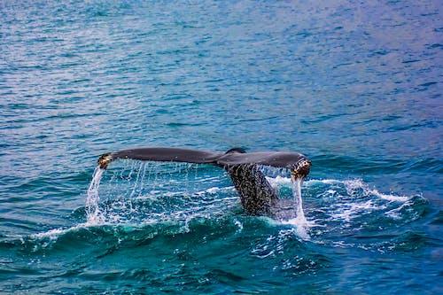 hdr, アクション, クジラ, シースケープの無料の写真素材