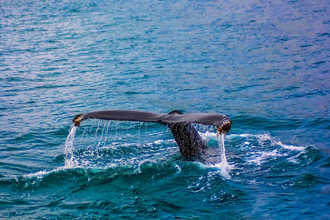 Closeup Photography of Whale