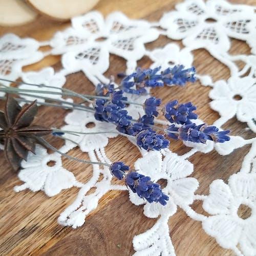 Free stock photo of lavender, lavender color, lavender flower