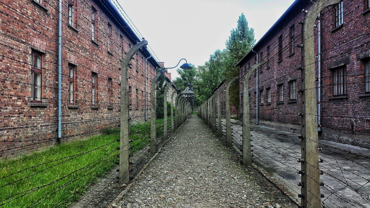auschwitz, auschwitz toplama kampı, bağbozumu