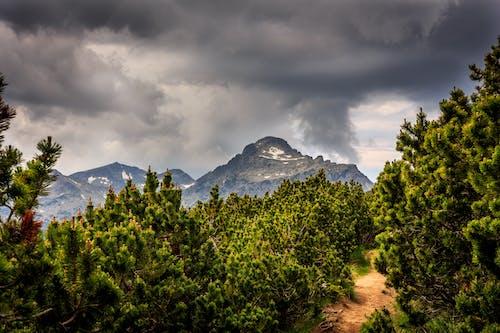 Kostnadsfri bild av barrträd, bergiga landformer, bergskedja, bergstopp