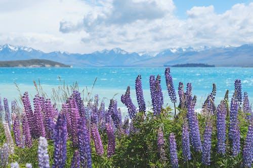 bitki örtüsü, bitkiler, bulanıklık, bulutlar içeren Ücretsiz stok fotoğraf