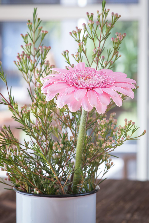 Foto d'estoc gratuïta de bonic, botànic, brillant, cassola