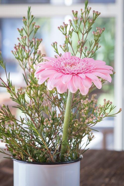 Fotobanka sbezplatnými fotkami na tému botanický, črepník, detailný záber, farba