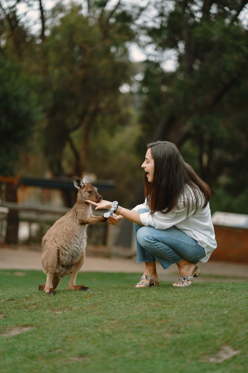 Excited woman hand feeding cute little kangaroo