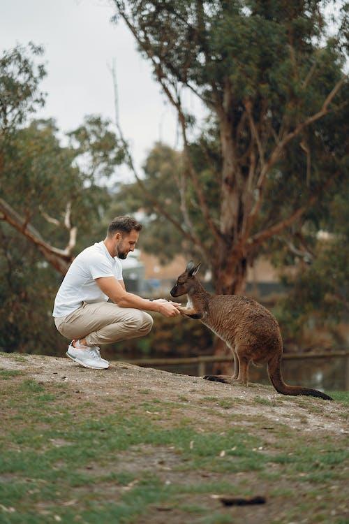 Gratis lagerfoto af afslappet, aktivitet, Australien, berøring