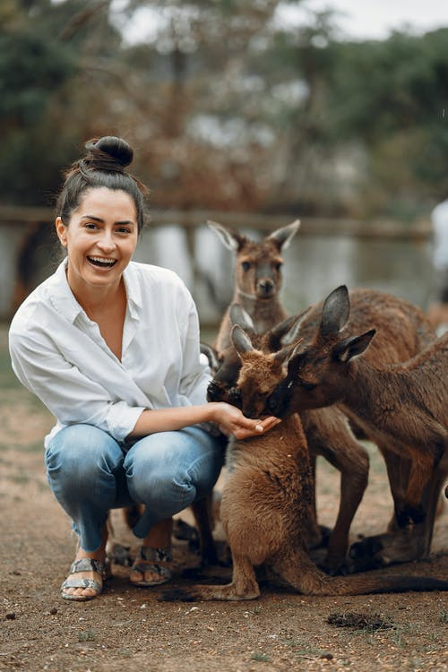 Excited young woman feeding kangaroos in park