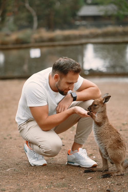 Man in White T-shirt and White Shorts Sitting on Ground With Brown Kangaroo