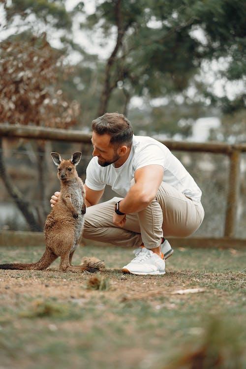 Gratis stockfoto met aanbiddelijk, aantrekkelijk, aardig, Australië