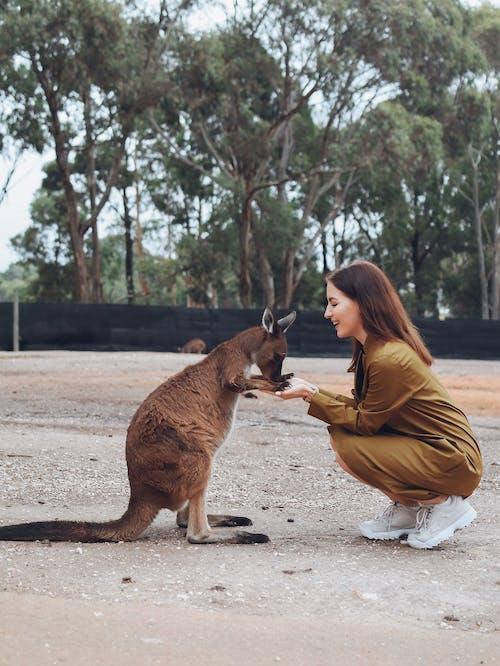 Kostenloses Stock Foto zu abenteuer, angenehm, ausdrucksvoll, australien