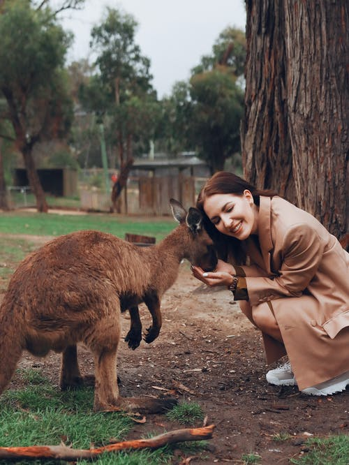 Woman in Brown Coat Sitting Beside Brown Kangaroo