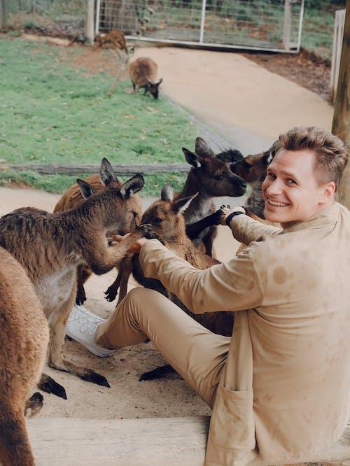 Gratis stockfoto met aanbiddelijk, aardig, achteraanzicht, Australië