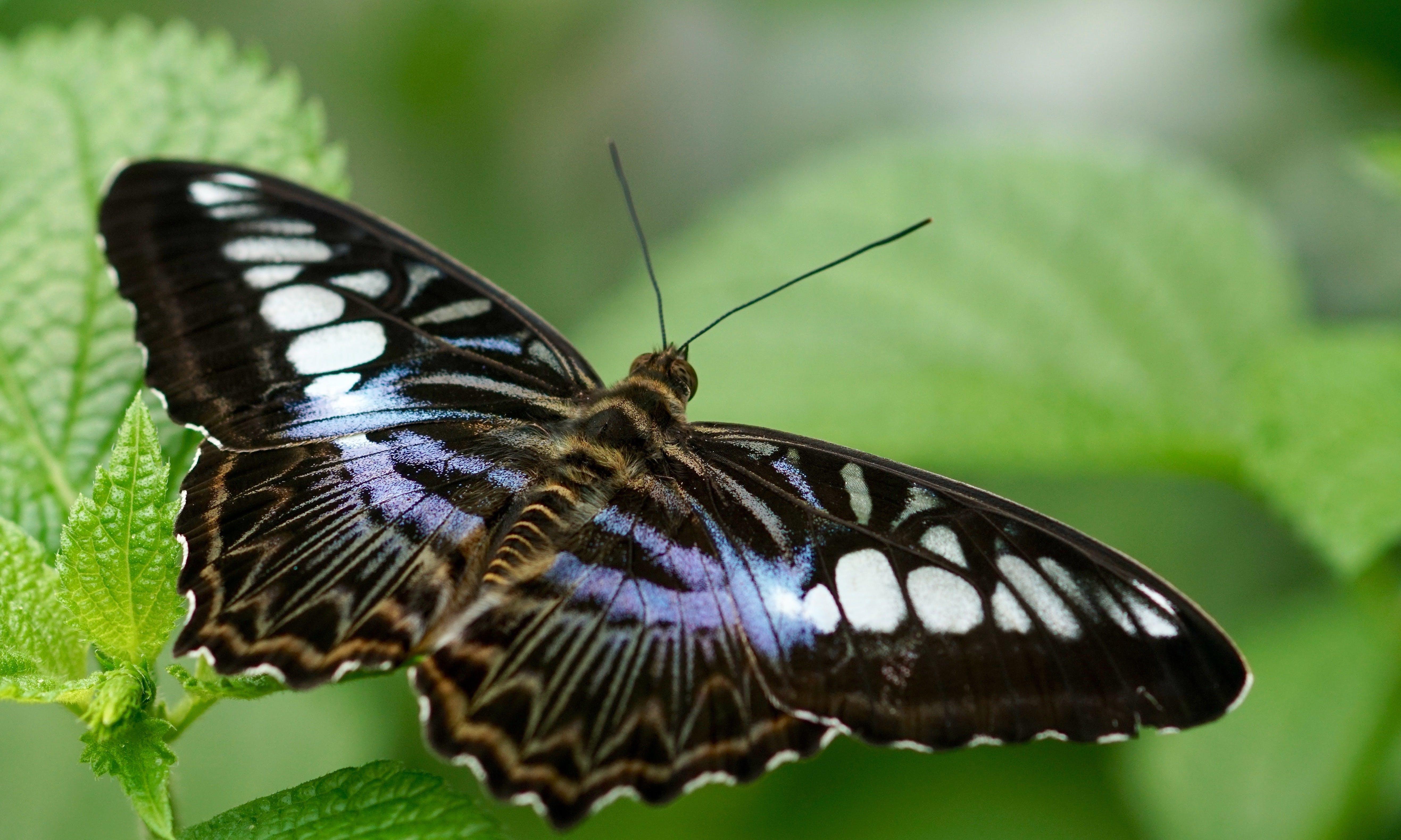 Kostenloses Stock Foto zu biologie, bunt, entomologie, exotisch