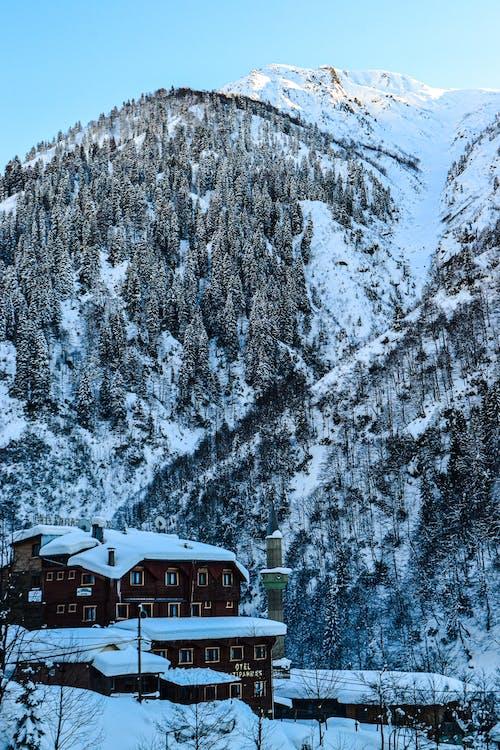Imagine de stoc gratuită din altitudine, anotimp, arbori veșnic verzi
